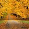صور الخريف بين السحر والجمال (أكثر من 30 صورة)