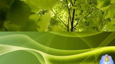 Photo of 25 خلفية لمحبي اللون الأخضر للحواسيب ذات الشاشات المزدوجة