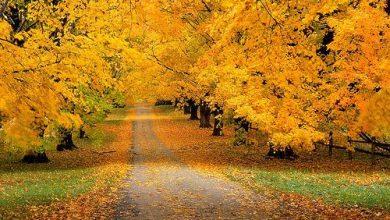 Photo of صور الخريف بين السحر والجمال (أكثر من 30 صورة)